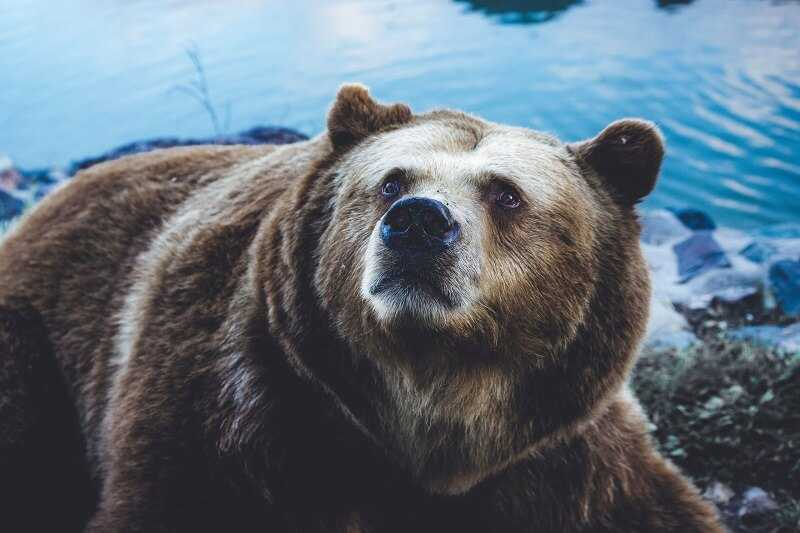 The Bear Market Rally Will Come Later This Year?