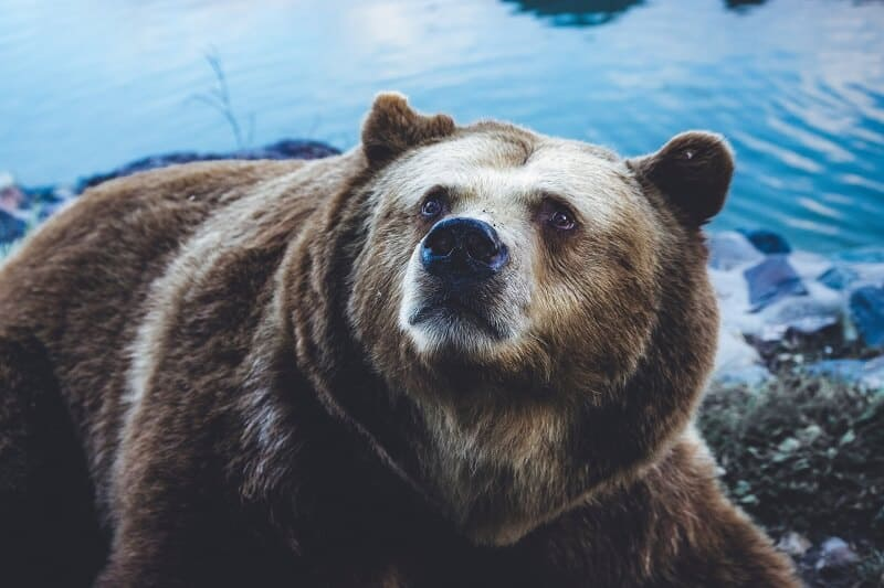 Morgan Stanley Claims We Are In A Bear Market
