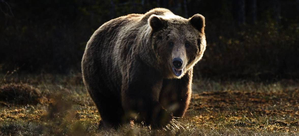 How to defeat the bear market