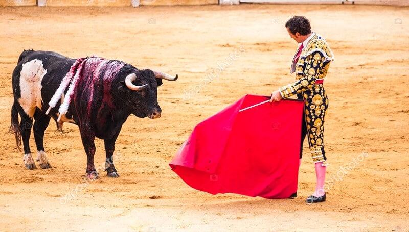 stock bull market