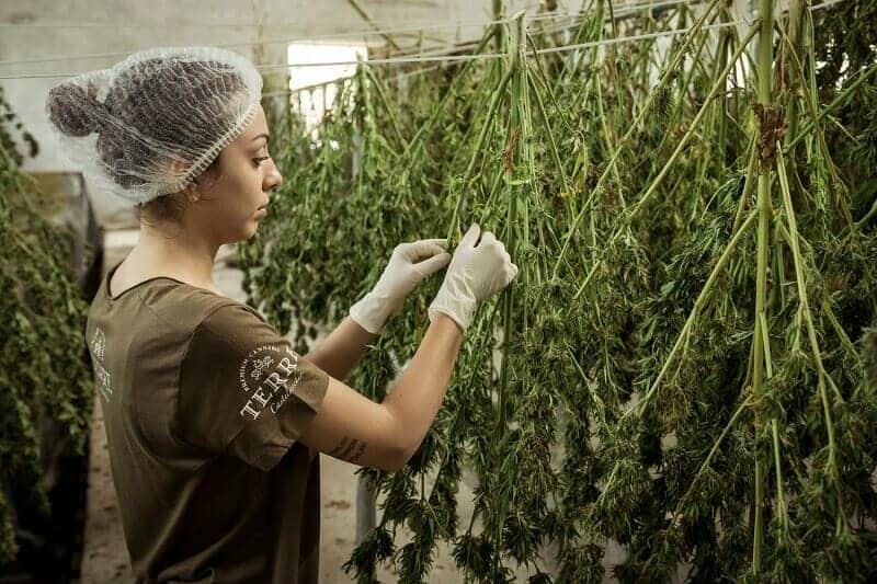 Cannabis Companies Are infusing Optimism Into Markets