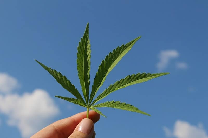 Trulieve Cannabis Corp. Revenue Grew 150% In Q3 Report