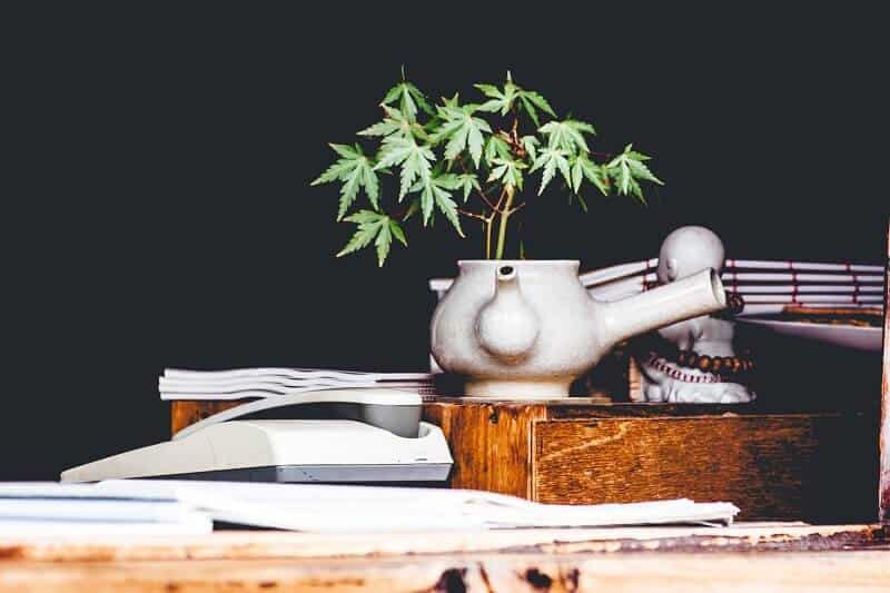 Get Into Cannabis Investment