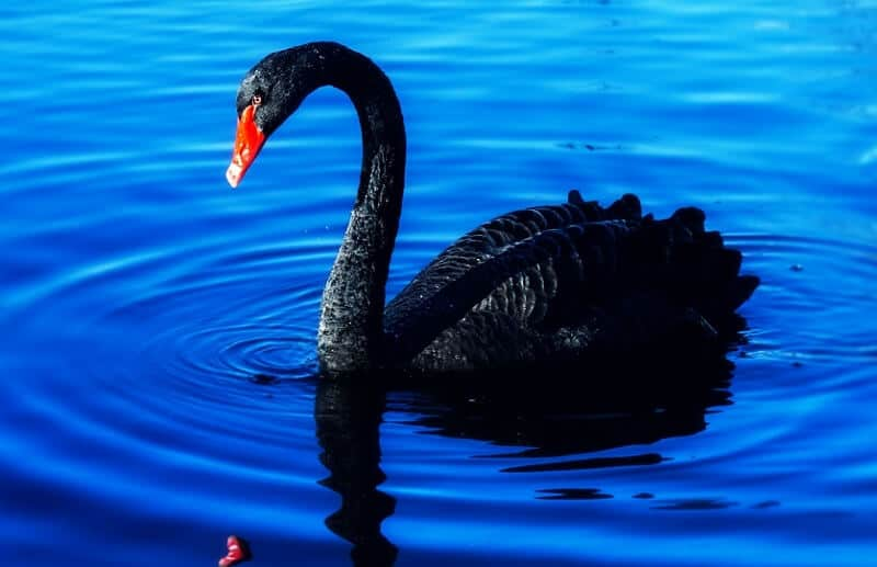 Black Swan Investing Strategy