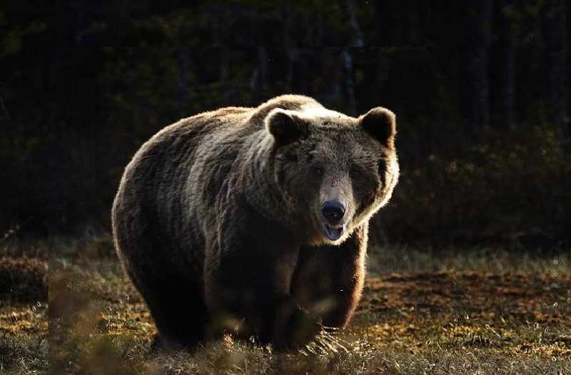 The Bear Market Starts - How To Avoid Big Losses?