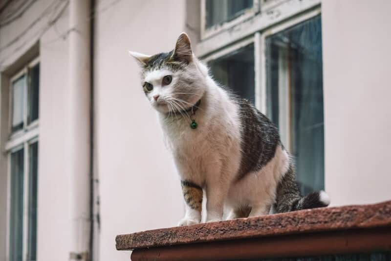 A Dead Cat Bounce - How To Trade It