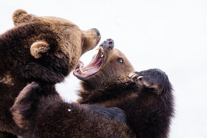 How Long Will The Bear Market Last?