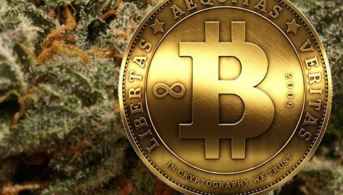 Cannabis VS Bitcoin